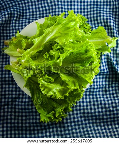 Fresh and green lettuce - stock photo