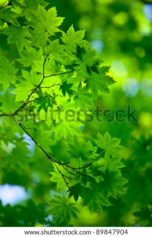 Fresh and pure spring background with green trees - stock photo
