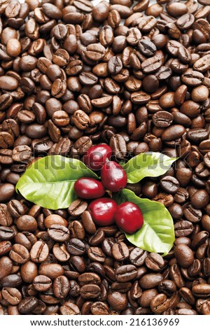 Fresh and roasted coffee beans - stock photo