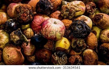 Fresh apple over bunch of rotten apples - stock photo