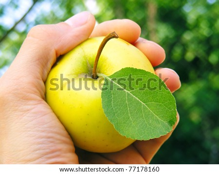 Fresh apple with green leave in arm - stock photo