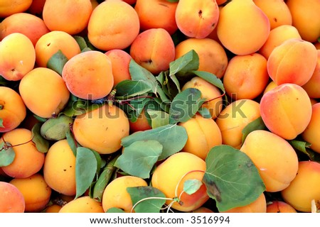 Fresh apricots for sale in a bin at the outdoor Farmer's Market - stock photo