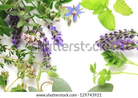 Fresh aromatic herbs border composition - stock photo