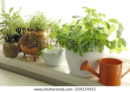 Fresh aromatic herbs in pots on window - stock photo