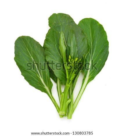 Fresh asian kale lettuce on white - stock photo