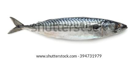 Fresh atlantic mackerel isolated on white - stock photo