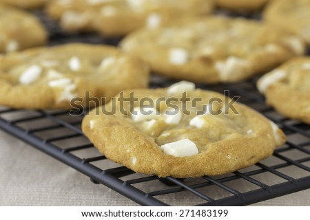 Fresh baked white chocolate and macadamia cookies on a cooling rack. - stock photo