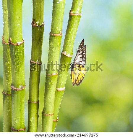 Fresh bamboo and butterfly with summer scene background - stock photo