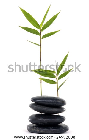 Fresh bamboo leaves with stacked pebbles isolated on white background