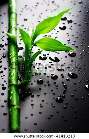 Fresh Bamboo over black - stock photo