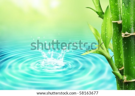 Fresh bamboo with water ripple - stock photo