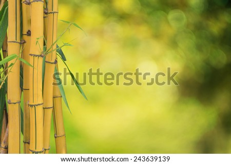 Fresh bamboo yellow isolated on Blurred green background - stock photo