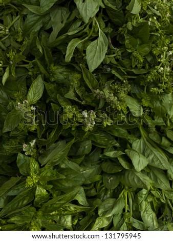 Fresh basil at the local farmer's market. - stock photo