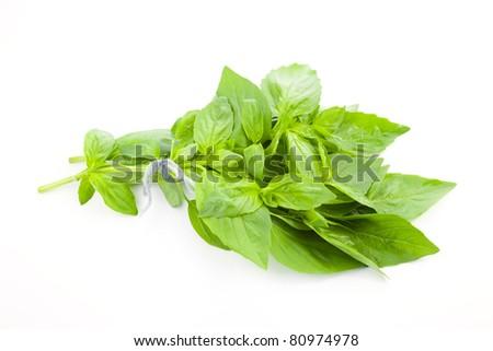 Fresh Basil / close-up on white background - stock photo