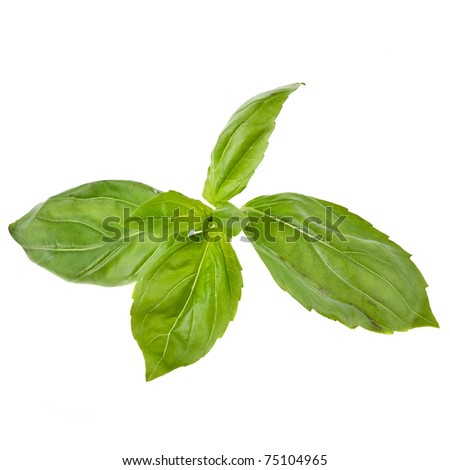 Fresh basil isolated on white