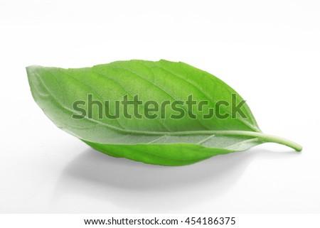Fresh basil leaf on  white background - stock photo