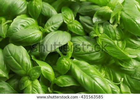 Fresh basil leaves background - stock photo