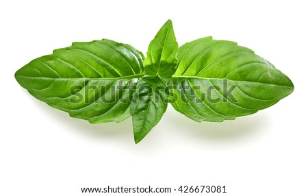 Fresh basil leaves isolated on white background including clipping path - stock photo