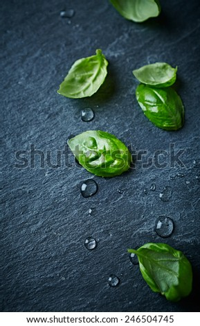 Fresh basil leaves on black slate - stock photo