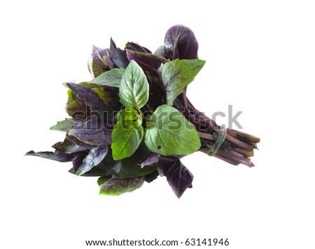 Fresh basil on a white background - stock photo