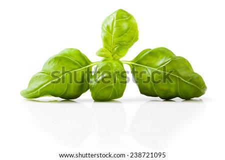 fresh basil on isolated background - stock photo