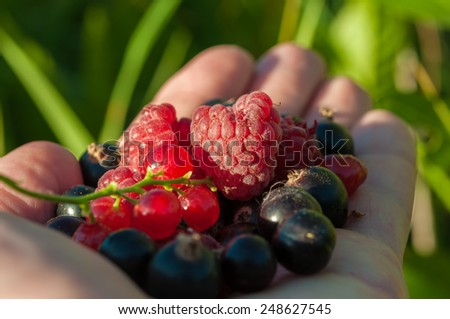 Fresh berries on hand against the green grass. - stock photo