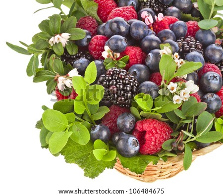 fresh berries with flowering wild berries isolated on a white background - stock photo