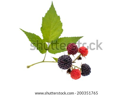 fresh berry blackberry with green leaf isolated on white background