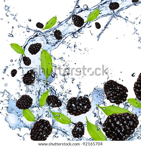 Fresh blackberries falling in water splash, isolated on white background