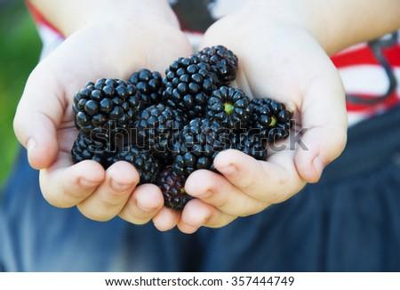 Fresh blackberries in small pens girl - stock photo