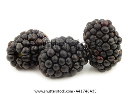 fresh blackberries on a white background - stock photo