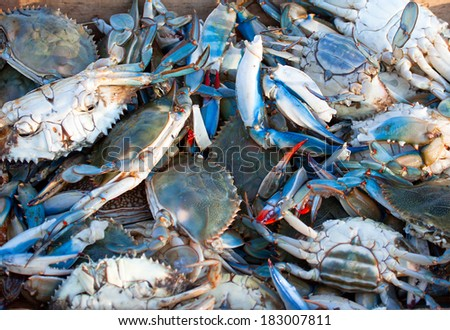 Fresh blue Crab  - stock photo