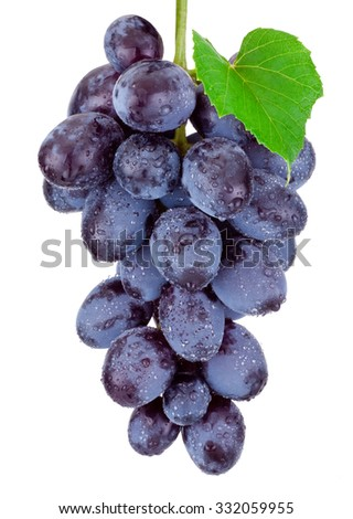 Fresh blue grapes hanging isolated on a white background - stock photo
