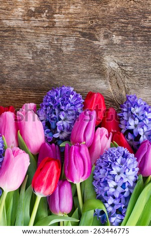 fresh blue hyacinth and  tulip flowers  on wooden background with copy space - stock photo