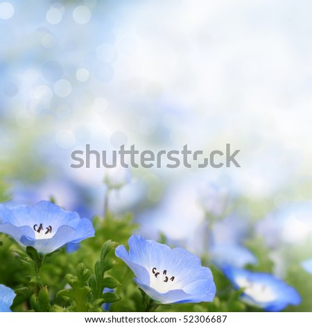 Fresh, blue, soft summer blossoms on bokeh background. Shallow DOF. - stock photo