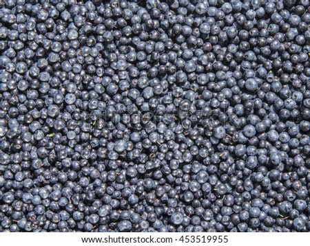 Fresh blueberries texture or background