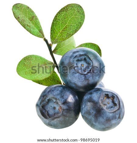 fresh blueberries with leaves closeup macro isolated on a white background - stock photo