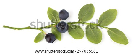 Fresh blueberries with leaves isolated on white background