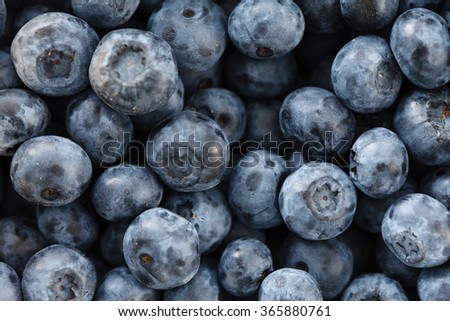 fresh blueberry - stock photo