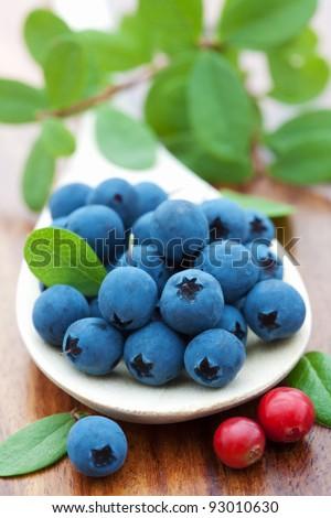 fresh blueberry - stock photo
