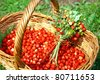 Fresh bouquet of forest strawberries - stock photo