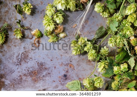 Fresh branches and cones of green hop and ears of barley over old metal background. Beer concept. With copy space at left. Top view. - stock photo