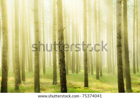 Fresh bright forest in springtime - stock photo