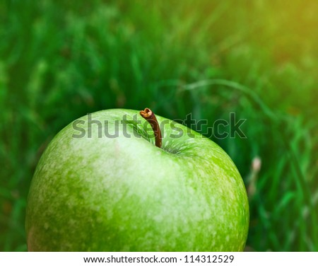 fresh bright green apple over grass background in evening sunshine - stock photo
