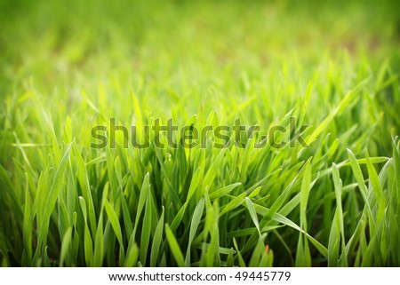 Fresh bright green grass, macro, shallow focus