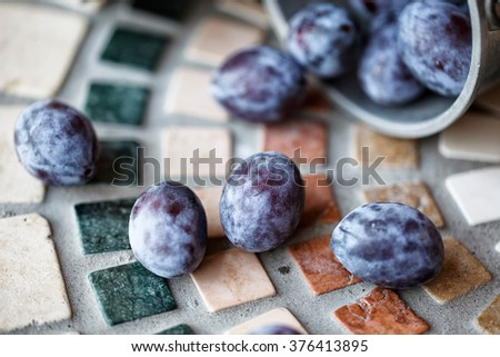 Fresh bright lilac colored Prunes harvested from Farm tree