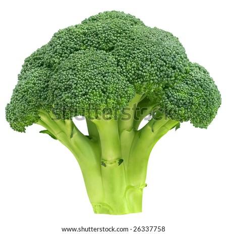 Fresh broccoli, isolated on white - stock photo