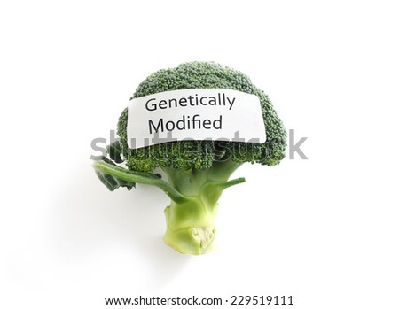 Fresh broccoli on white with Genetically Modified label                                - stock photo