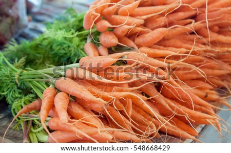 Fresh bunch of baby carrots for sell