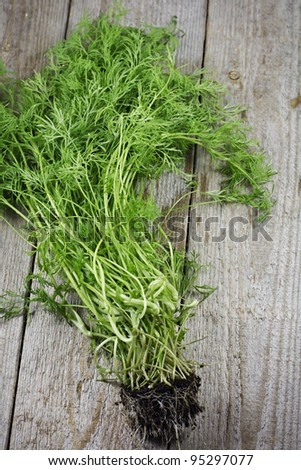 Fresh Bunch of Dill on Rustic Garden Table. Shallow Depth of Field. - stock photo